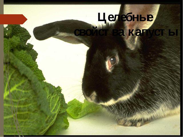 Целебные свойства капусты 1. Измельченная сырая капуста повышает аппетит, улу...