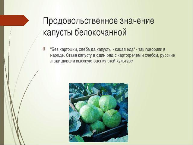 """Продовольственное значение капусты белокочанной """"Без картошки, хлеба да капус..."""