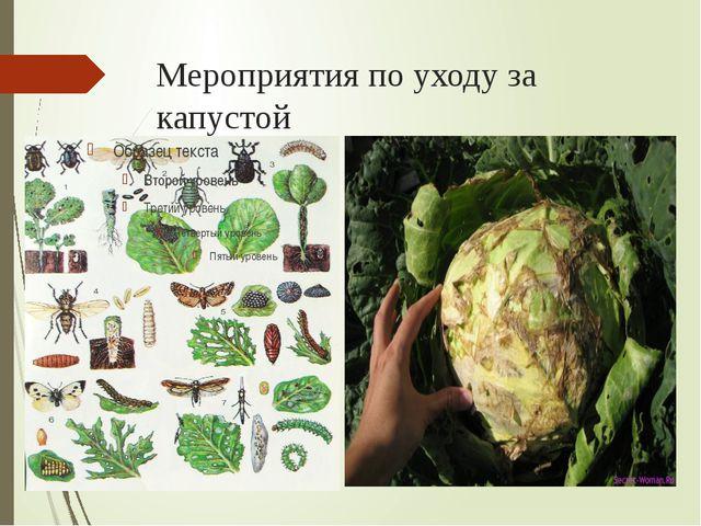 Мероприятия по уходу за капустой