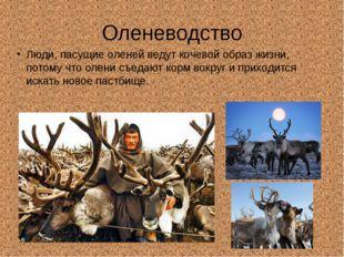 Оленеводство Люди, пасущие оленей ведут кочевой образ жизни, потому что олени