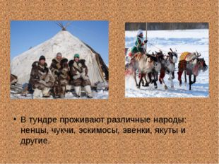 В тундре проживают различные народы: ненцы, чукчи, эскимосы, эвенки, якуты и