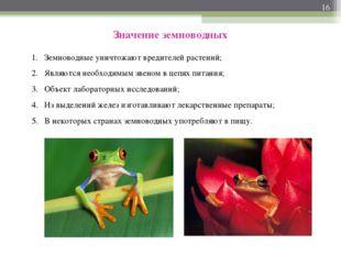 * Значение земноводных Земноводные уничтожают вредителей растений; Являются н
