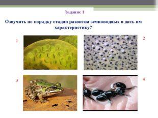 Задание 1 Озвучить по порядку стадии развития земноводных и дать им характери