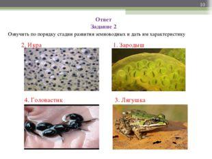 Ответ Задание 2 Озвучить по порядку стадии развития земноводных и дать им хар