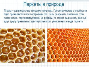Паркеты в природе  Пчелы – удивительные творения природы. Геометрические спо