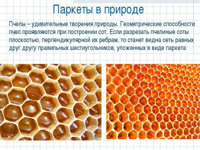 Паркеты в природе  Пчелы – удивительные творения природы. Геометрические спо...