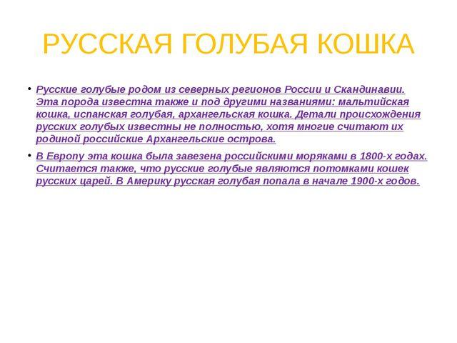 РУССКАЯ ГОЛУБАЯ КОШКА Русские голубые родом из северных регионов России и Ска...