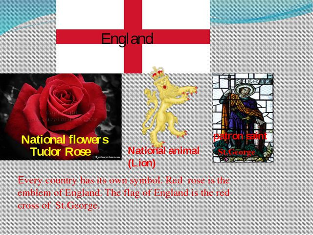 Every country has its own symbol. Red rose is the emblem of England. The flag...