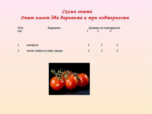 Схема опыта Опыт имеет два варианта и три повторности №№ п/пВариантыДелянк...