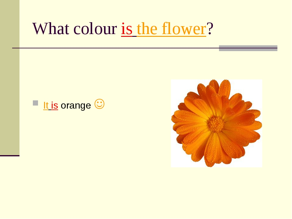 What colour is the flower? It is orange 