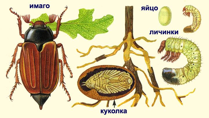 http://school-collection.lyceum62.ru/ecor/storage/e40bf6d5-5b39-41ce-9381-88bcde1c2228/%5BBI7GI_7-03%5D_%5BIL_01%5D-k.jpg