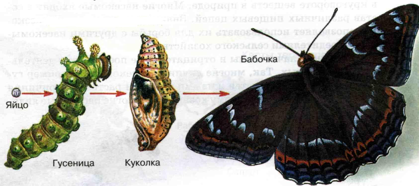 http://www.pics-zone.ru/img.php?url=http://900igr.net/datai/biologija/Embrionalnyj-period-razvitija/0016-026-Razvitie-zemnovodnogo.jpg
