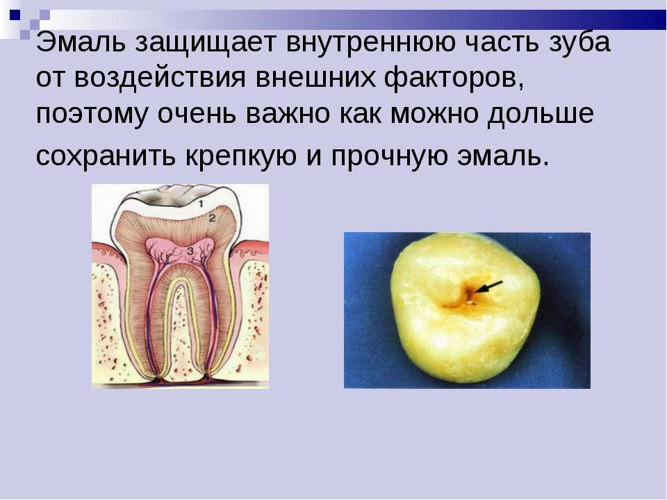 Эмаль защищает внутреннюю часть зуба от воздействия внешних факторов, поэтому...