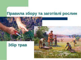 Правила збору та заготівлі рослин Збір трав