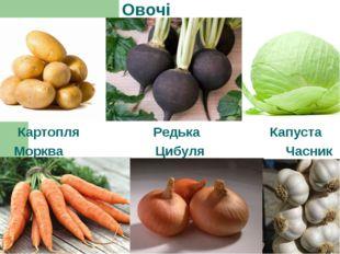 Овочі Картопля Редька Капуста Морква Цибуля Часник