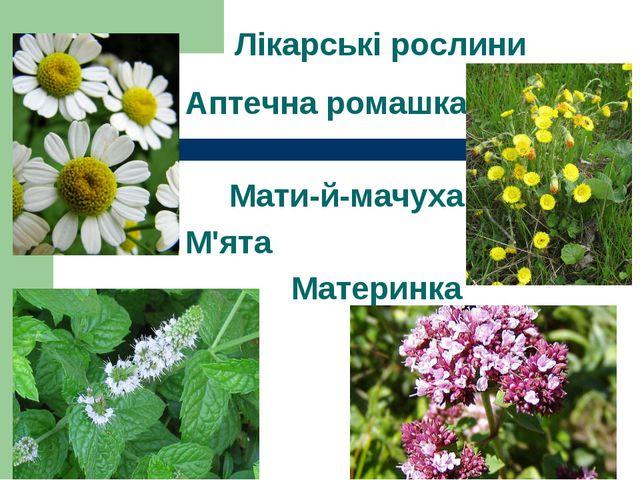 Лікарські рослини Аптечна ромашка Мати-й-мачуха М'ята Материнка