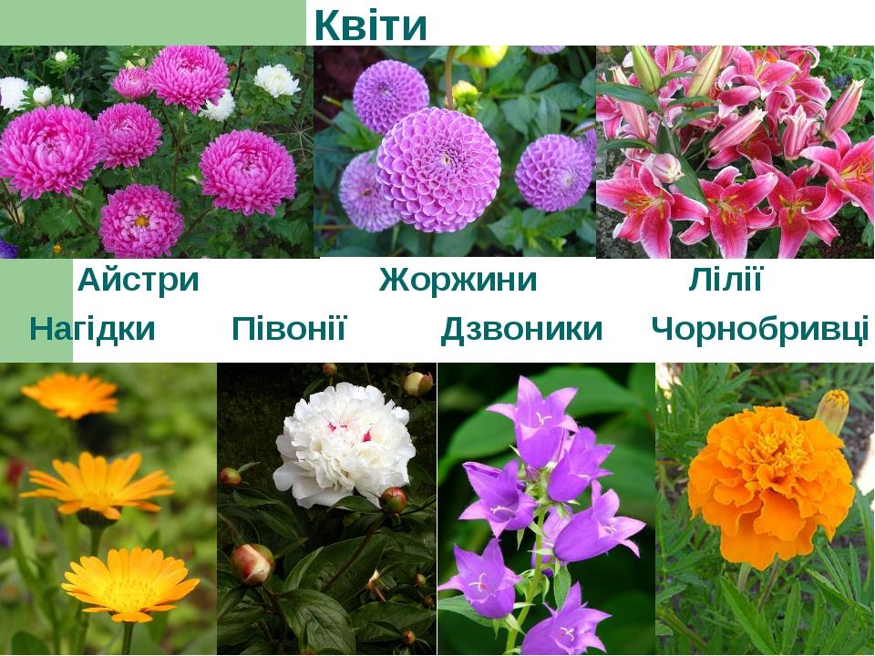 Квіти Айстри Жоржини Лілії Нагідки Півонії Дзвоники Чорнобривці
