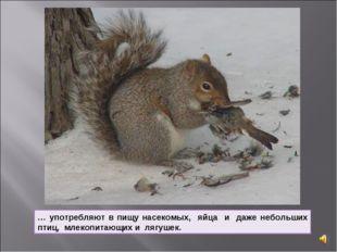 … употребляют в пищу насекомых, яйца и даже небольших птиц, млекопитающих и л