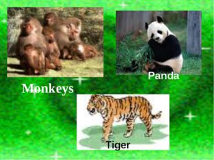 Tiger Panda Monkeys.