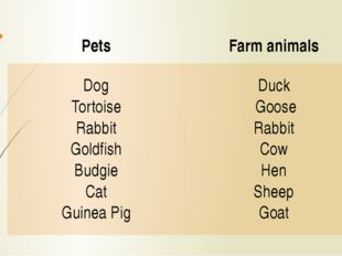 Pets Farm animals Dog Tortoise Rabbit Goldfish Budgie Cat Guinea Pig Duck Goo