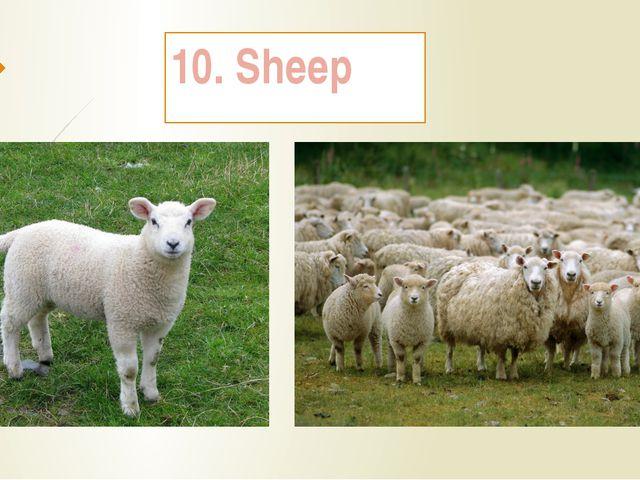 10. Sheep