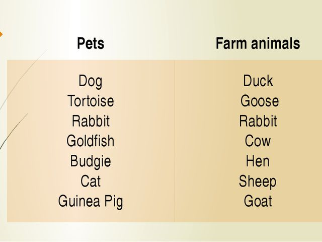 Pets Farm animals Dog Tortoise Rabbit Goldfish Budgie Cat Guinea Pig Duck Goo...
