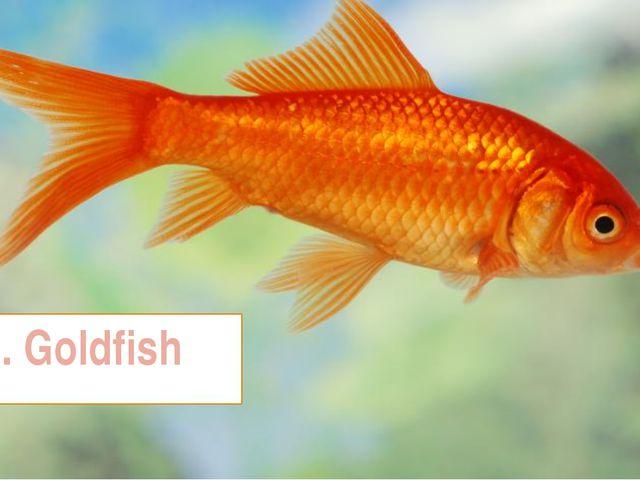 6. Goldfish