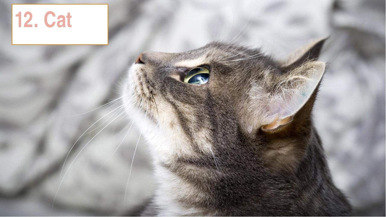 12. Cat
