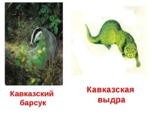 Кавказский барсук Кавказская выдра