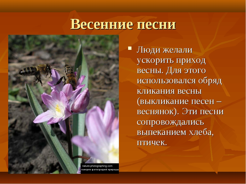 Весенние песни Люди желали ускорить приход весны. Для этого использовался обр...