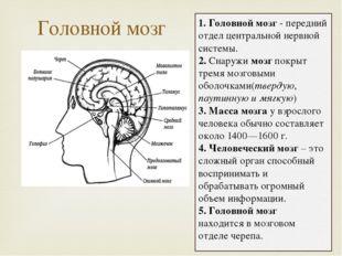 Головной мозг 1. Головной мозг - передний отдел центральной нервной системы.