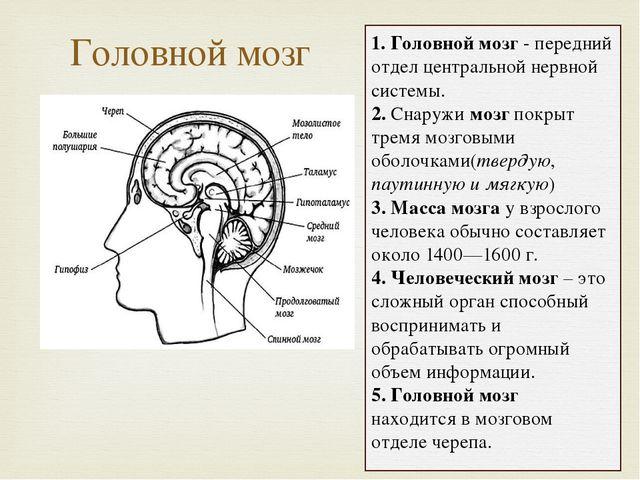 Головной мозг 1. Головной мозг - передний отдел центральной нервной системы....