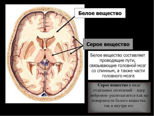 Серое вещество в виде отдельных скоплений – ядер нейронов- располагается как...