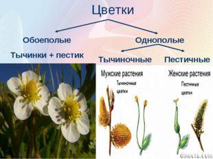 Цветки Обоеполые Тычинки + пестик Однополые Пестичные Тычиночные