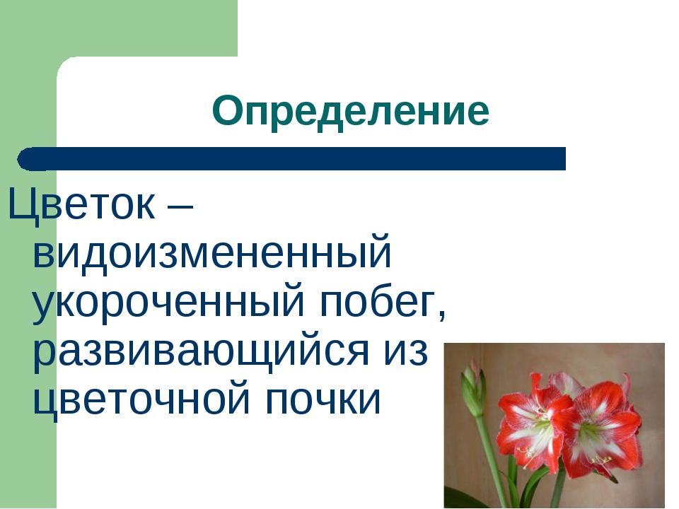 Определение Цветок – видоизмененный укороченный побег, развивающийся из цвето...