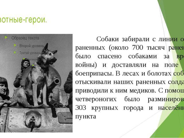 Животные-герои. Собаки забирали с линии огня раненных (около 700 тысяч ранены...
