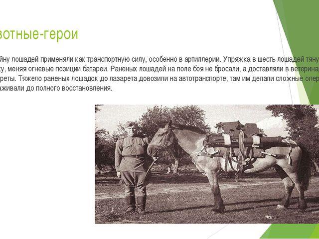 Животные-герои В войну лошадей применяли как транспортную силу, особенно в ар...