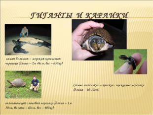 ГИГАНТЫ И КАРЛИКИ самая большая – морская кожистая черепаха (длина – 2м 44см