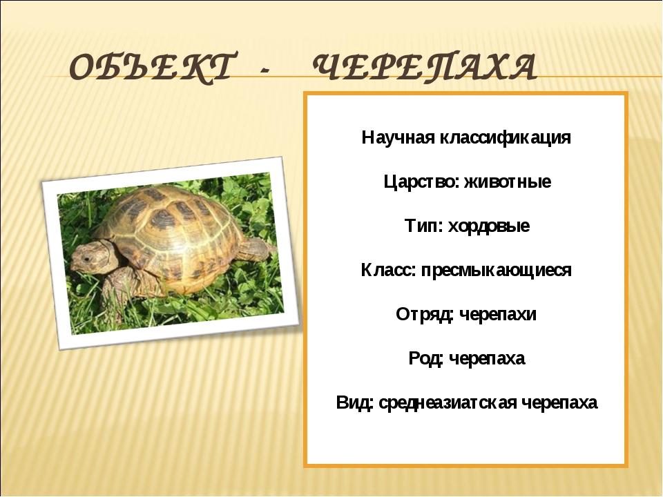ОБЪЕКТ - ЧЕРЕПАХА Научная классификация Царство: животные Тип: хордовые Клас...