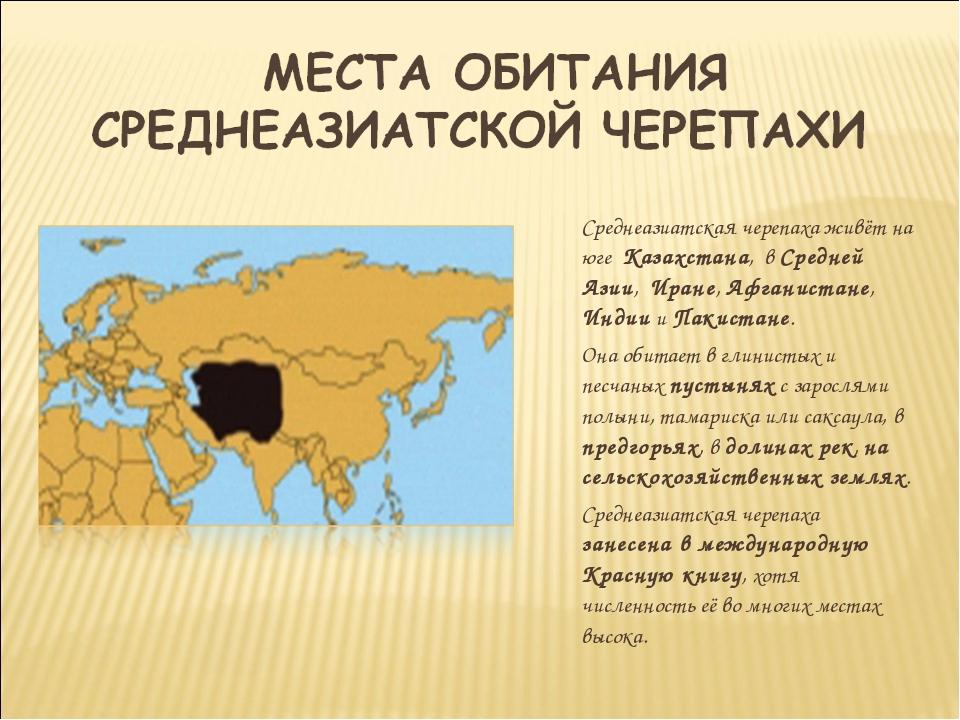 Среднеазиатская черепаха живёт на юге Казахстана, в Средней Азии, Иране, Афга...
