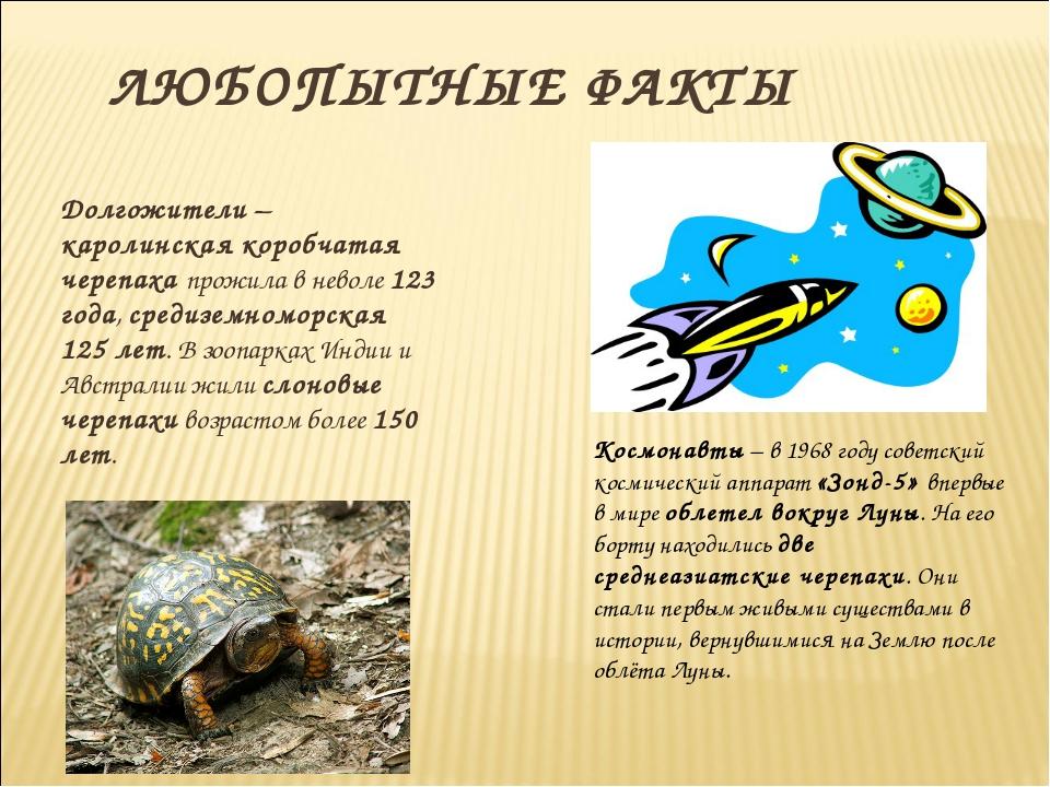 ЛЮБОПЫТНЫЕ ФАКТЫ Долгожители – каролинская коробчатая черепаха прожила в нев...