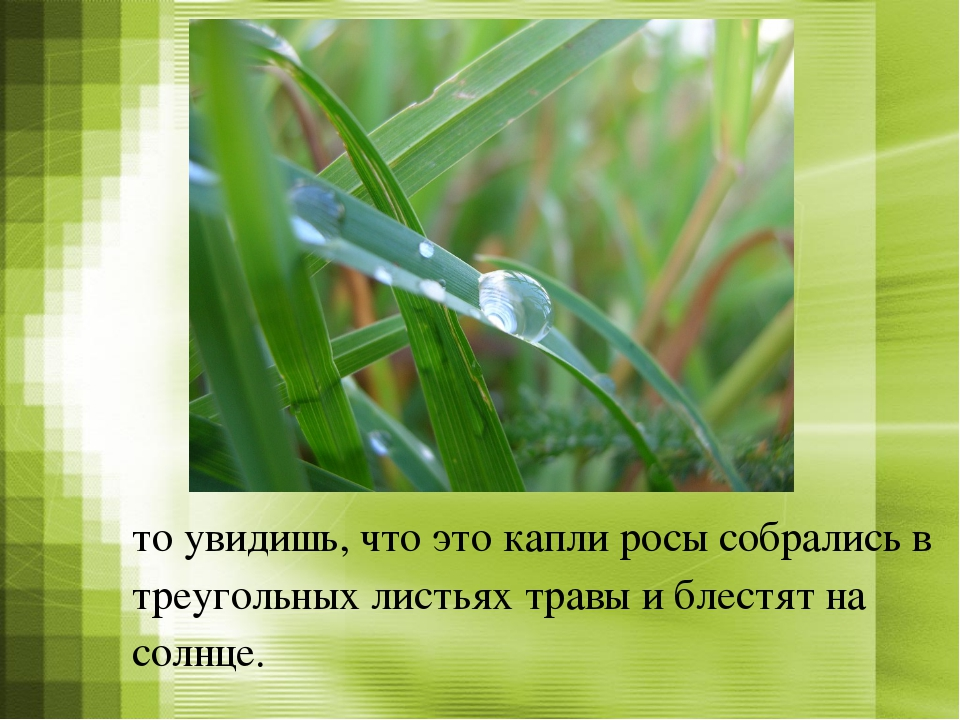 то увидишь, что это капли росы собрались в треугольных листьях травы и блестя...