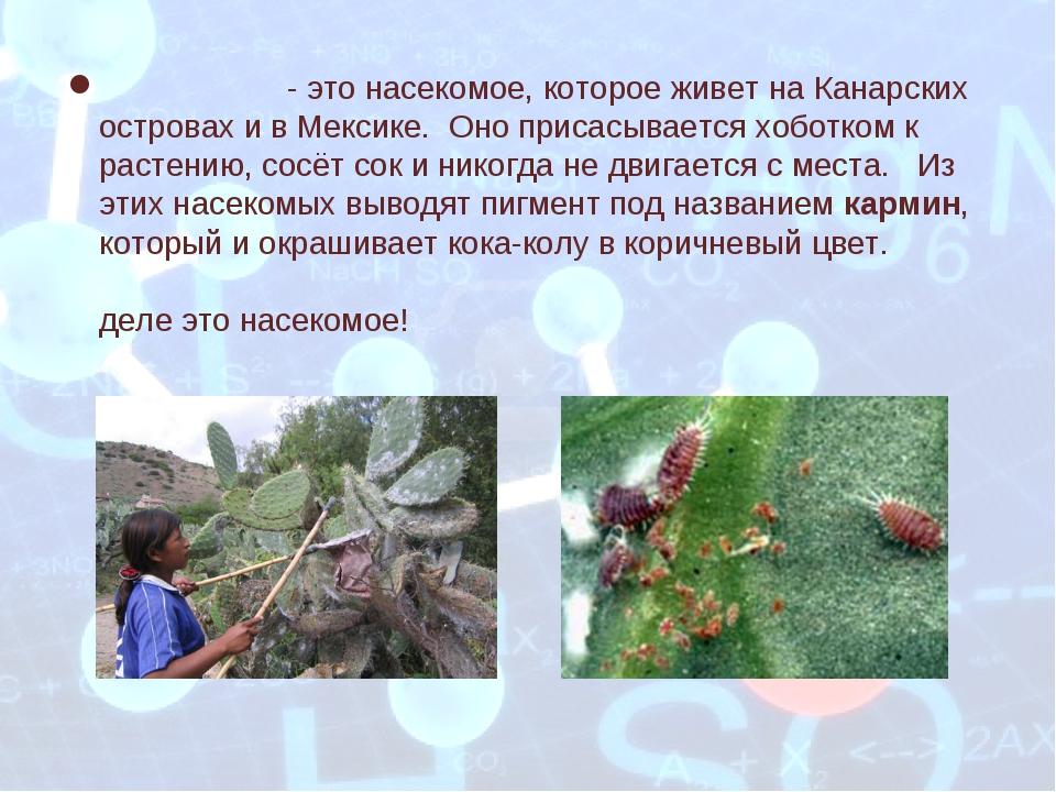 Кошени́ль - это насекомое, которое живет на Канарских островах и в Мексике. О...