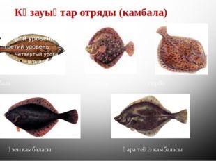 Көзауықтар отряды (камбала) камбала калкан тюрбо өзен камбаласы қара теңіз ка