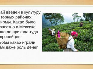 Чай введен в культуру в горных районах Бирмы. Какао было известно в Мексике е