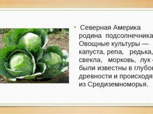 Северная Америка родина подсолнечника. Овощные культуры — капуста, репа, ред