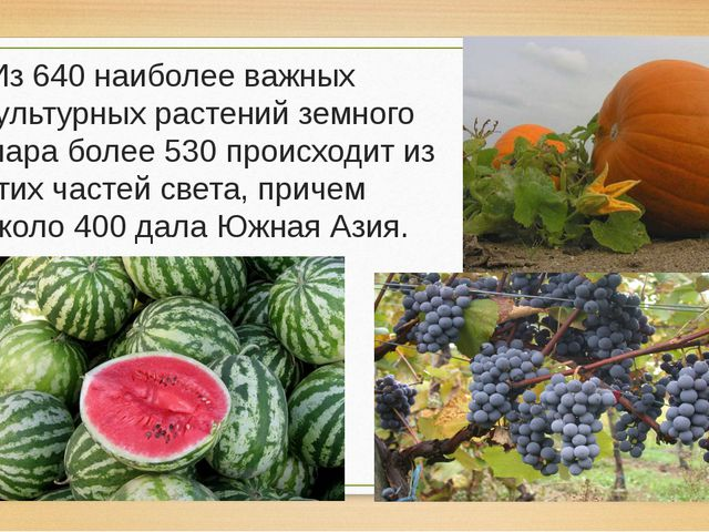 Из 640 наиболее важных культурных растений земного шара более 530 происходит...