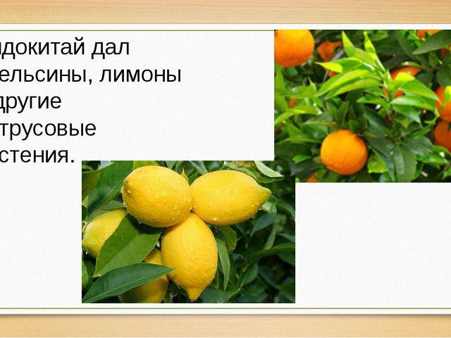Индокитай дал апельсины, лимоны и другие цитрусовые растения.