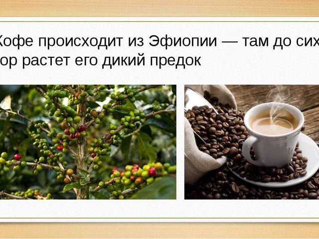 Кофе происходит из Эфиопии — там до сих пор растет его дикий предок