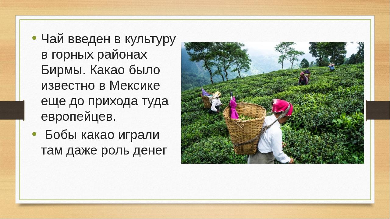 Чай введен в культуру в горных районах Бирмы. Какао было известно в Мексике е...